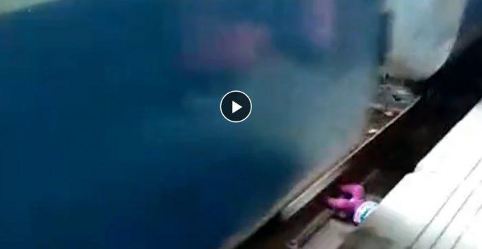 यी शिशु कस्ता भाग्यमानी, ट्रेनको ट्रयाकमा परेर पनि बाच्न सफल भए (हेर्नुहोस मुटु काप्ने भिडियो)